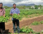 Irrigation Trade Show To Create Awareness For Farmers