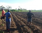 A Joint Venture Agriculture Partnership To Use Idle Land