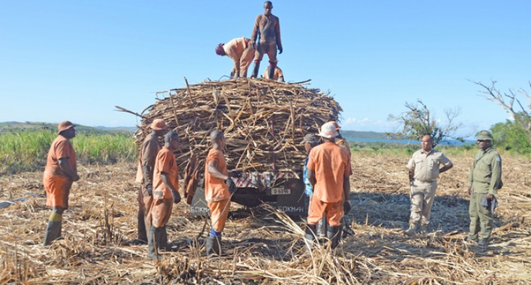 Inmates Boost Sugar Harvest, Production