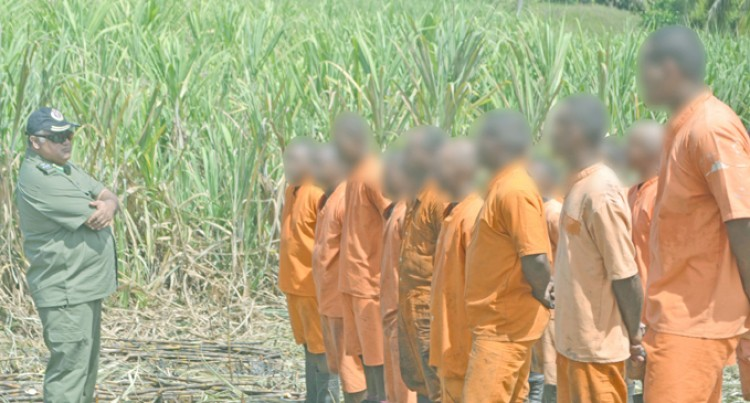 Inmates Step In To Cane Harvest Rescue