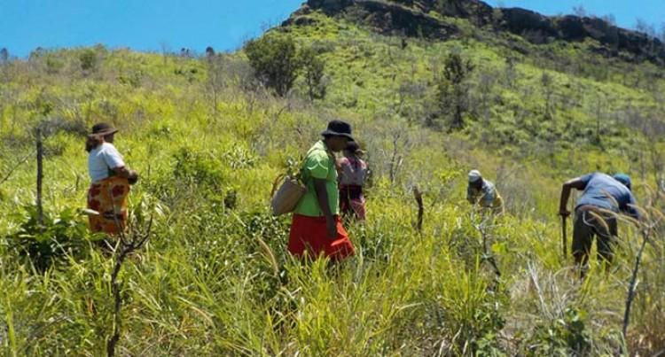 Mali Island Participates In Re-planting