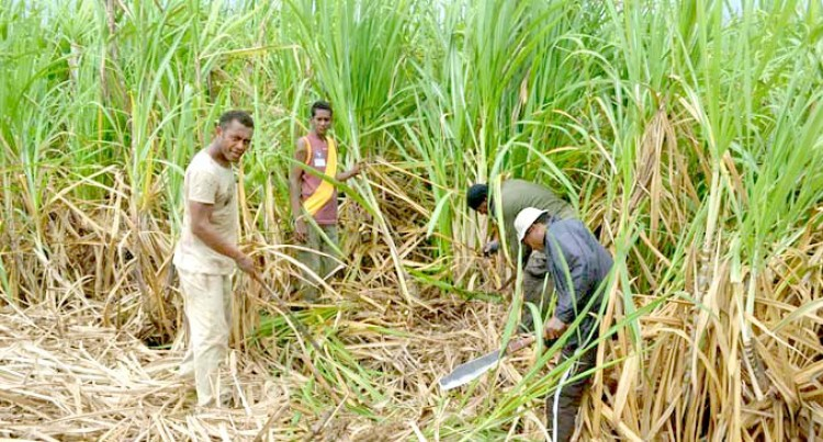 FSC Confident Of No Standover Cane In Macuata Province After Mill Termination: Christopher