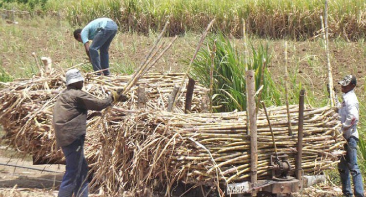 Two Mills Aims To Crush Standing Cane