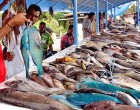 First National Fisheries Policy In The Pipeline