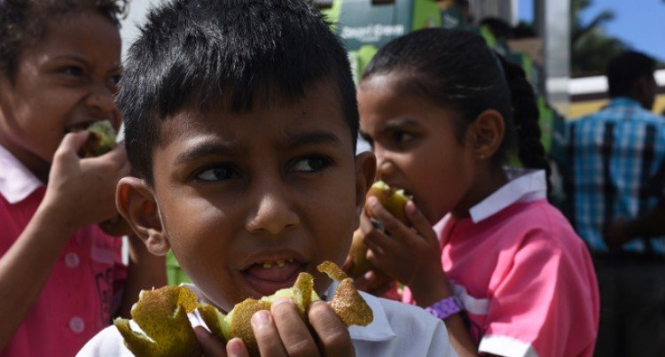 Kiwi Fruits For Central Division Schools