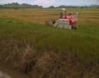 Rewa Rice Helps Farmers Facing Financial Difficulties