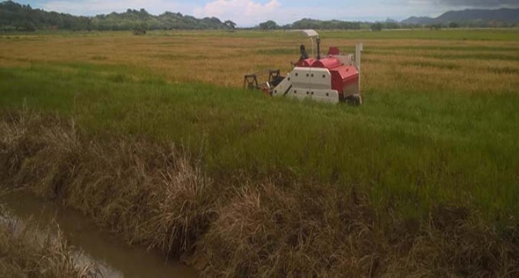 Rewa Rice Helps Farmers Facing Financial Difficulties
