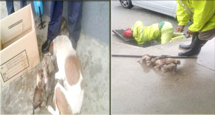 Council Workers Reunite Pups, Stuck in Manhole, With Their Mother