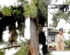 Lightning Strike Hits Tree, Misses Home