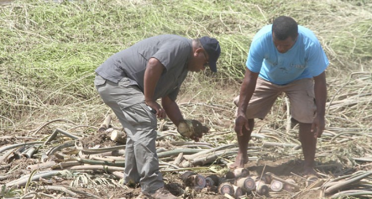 Minister Working Hard To Get Agriculture Assessment