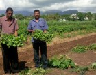 Farmers Urged To  Be Wary