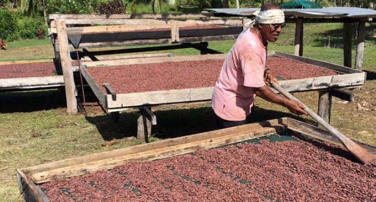 Cacao (Fiji) Limited's growth hindered by lack of supply