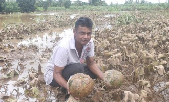 Efforts Wasted In A Few Days, Says Vegetable Farmer