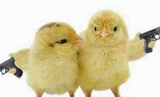 Chicken Shooting File To DPP Soon