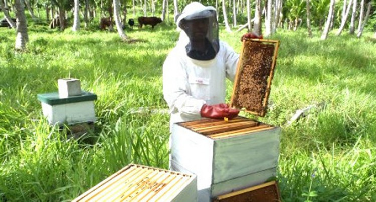 Beekeepers Benefit From New Caledonian Aid