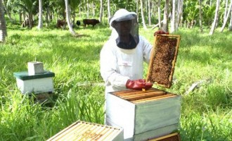 Beekeepers Benefit From New Caledonia Aid