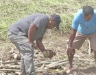 How Agriculture Sustained  Major Damage, Plan to Help