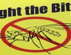 Fight The Bite On Dengue