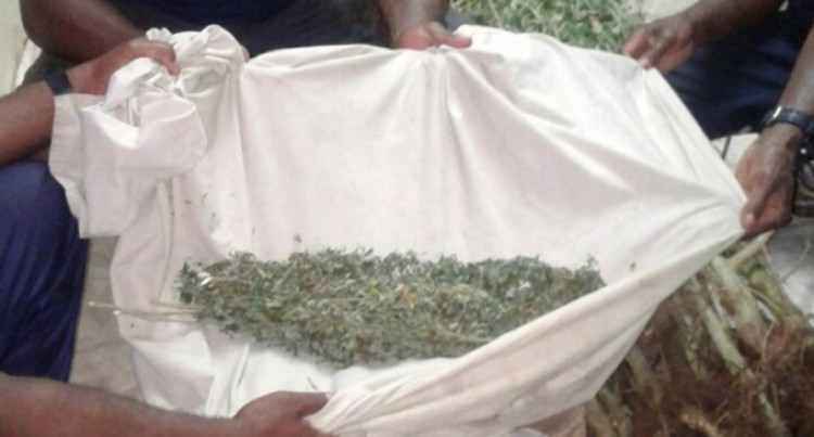 Suspected marijuana seized in Police raid