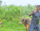 Farmers Urged to Take Precautionary Measures