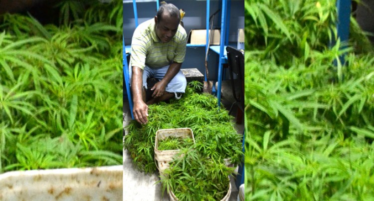 Raid Results In 1980 Plants Seized In Tabia