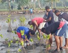 Ministry Resumes Mangrove Planting