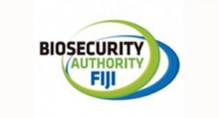 Biosecurity Seeks Public Support to Combat Termite Infestation