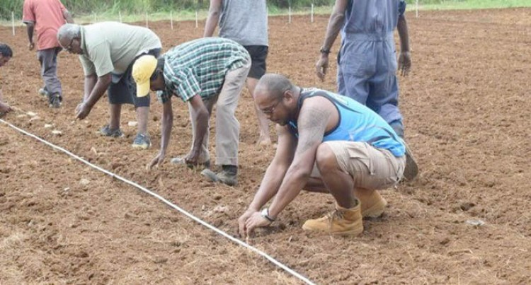 Ministry To Plant 14 Tonnes Of Potatoes