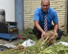 300 Suspected Marijuana Plants Seized