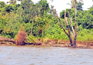 The place which was once dry land is now under water in the province of Rewa on April 5, 2017.Photo:Vilimoni Vaganalau