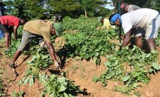 Tunaqase Focus On Beehive Production