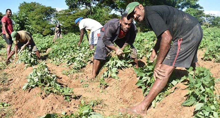 Sigavou Farmers For Youths Takes Shape In Nadi