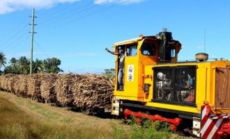 Burnt Cane Reduces Profit