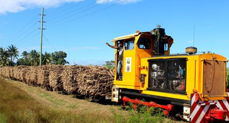 Burnt Cane Reduces Profit