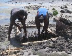 Community Tackle  Eroding Coastline,  Battle Climate Change