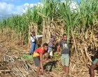 New Cane Harvesters  For Friendly North