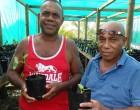 Yaqona nursery to provide plants for farmers