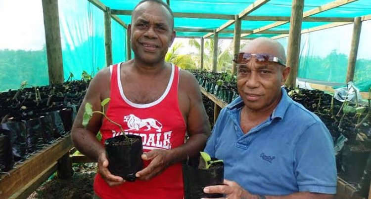 Yaqona nursery to provide plants for farmers