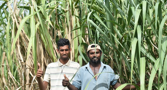More Cane Farmers Laud Government
