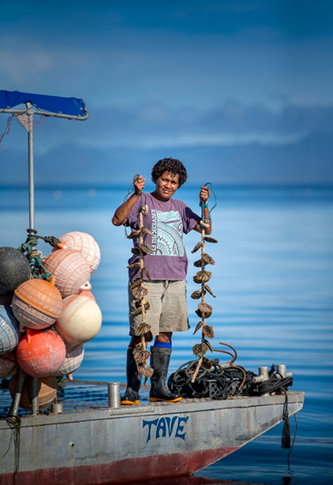 """The Fijian pearl oyster is classified as an """"indicator species"""" and is well known to be environmentally sensitive. Photo: J Hunter Pearls FIJI"""