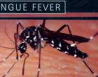 2 More Die As Dengue Cases Increase By  558 In 2 Weeks