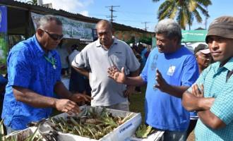Farmer Ventures Into Pineapple Farm