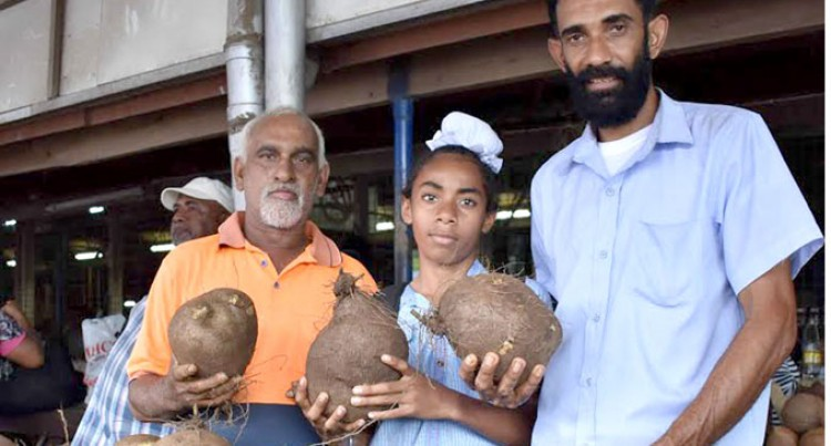 Yam Demand Is Great: Singh