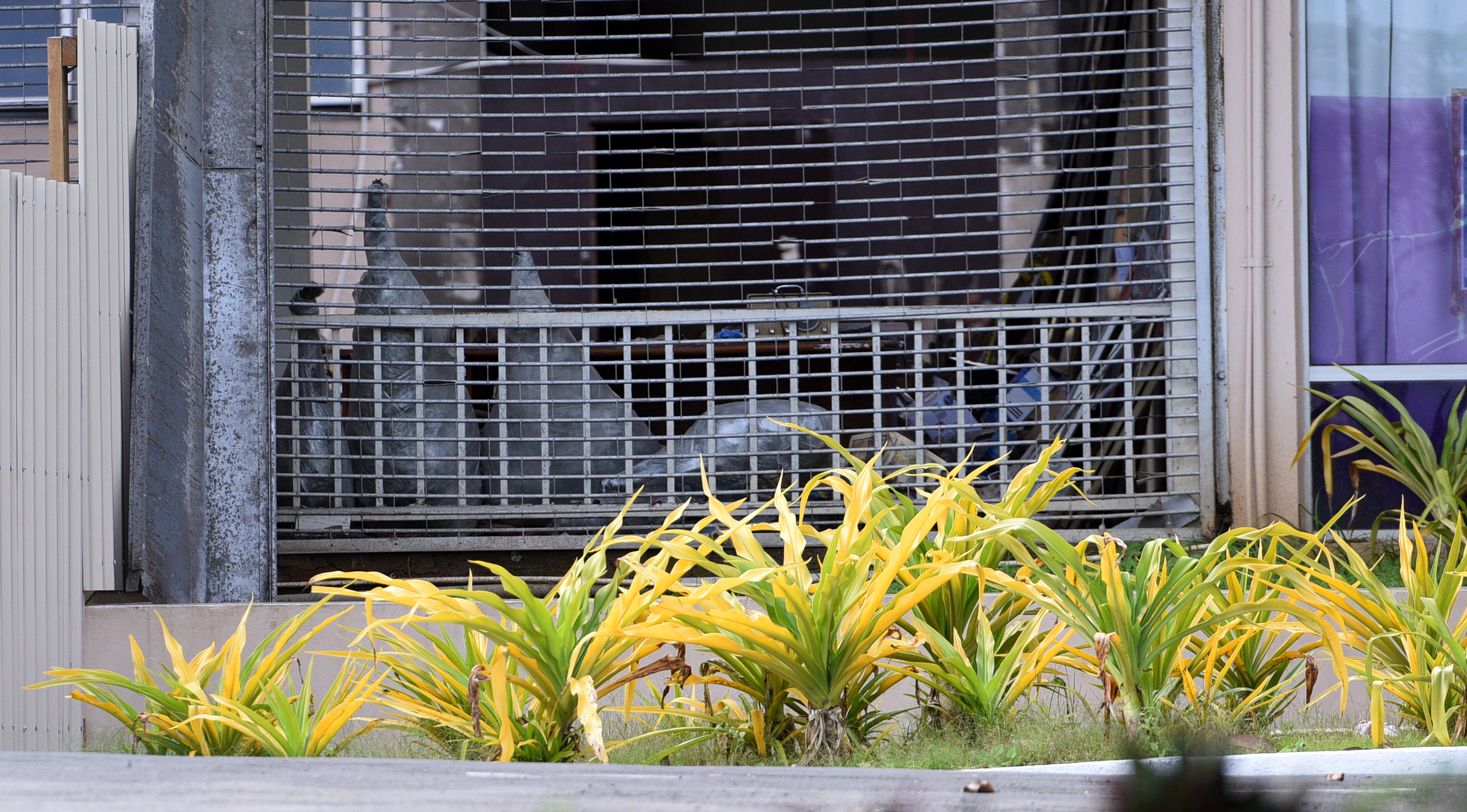Well wrapped items can be clearly seen at the scene of construction at the Suva Civic Center following the asbestos scare that threatened the city on Friday June 2nd, 2017. Photo:Jone Luvenitoga