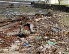 EDITORIAL-Support Anti-plastic Campaign To Keep Our Environment Clean And Tidy
