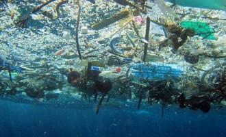 Marine Population Fact Sheet