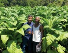 Farmer Earns $20k With Tobacco