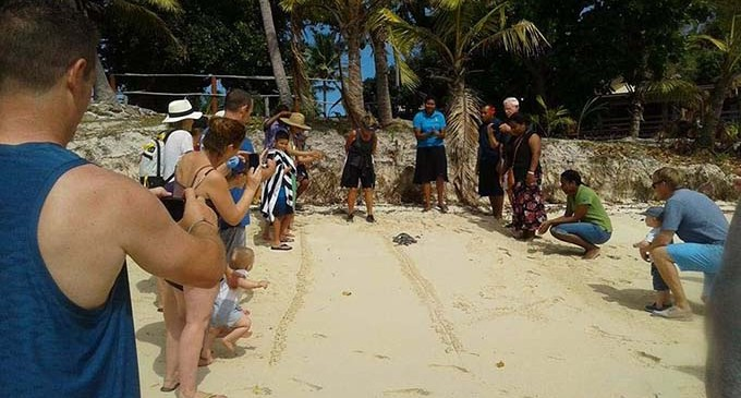 Mana Farewells Turtle Survivor