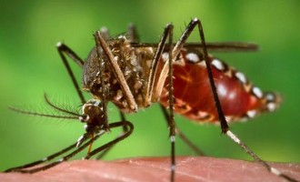 152 Cases Of Dengue Recorded In Nadroga-Navosa
