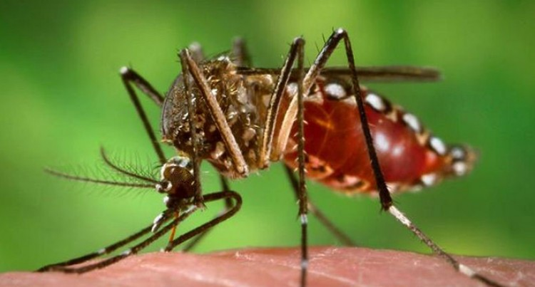152 Cases Of Dengue Recorded In Nadroga-Navosa